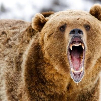 Медвежонок, 34 года, ищу девушку для редких встреч. готов платить за ка... Спонсор.