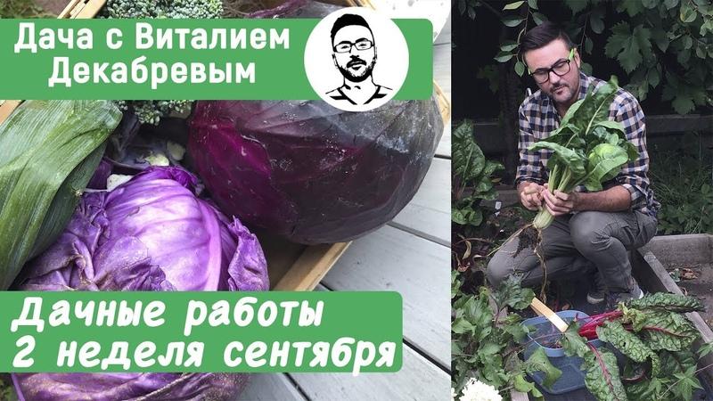 Дачные работы вторая неделя сентября Дачные сезоны с Виталием Декабревым
