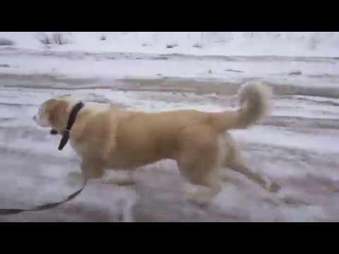 Пит Давлет Хан представляет Мир Т И Тренировка