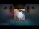 Memes Starboy Crash Bandicoot Gabe the Dog Big Ben Roadman