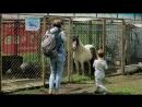 Бердский Контактный Зоопарк
