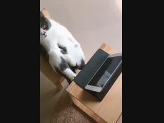 Современные котики