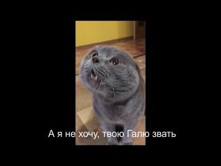 Кот говорит- Голова моя болит (6 sec)