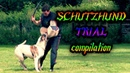 IPO Schutzhund Trial July 2017 Protection compilation Doberman,Bulldog,GSD