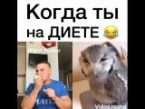 vidos.rasha___BoBjrcKgL1z___.mp4