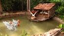 Goose Swimming Build Swimming Pool For Goose Under Stilt House