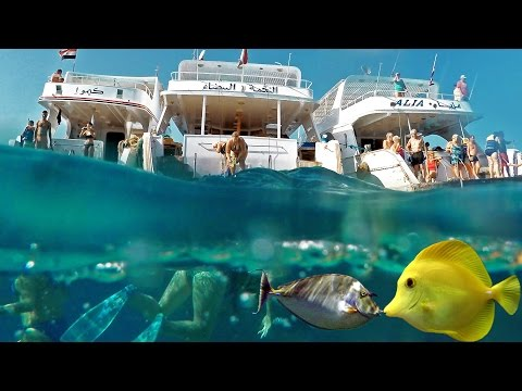 Egypt Red sea corals snorkeling. Yachts fish in Hurghada. 4K GoPro4black