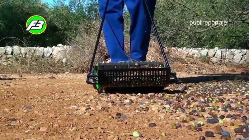 Olive harvester εργάτες της ελιάς ramasseuse d'olives zeytin toplama قاطفي الزيتون