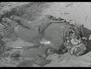 Личная съемка немецкого офицера из третьей танковой группы армии Центр самое начало лето 1941 года