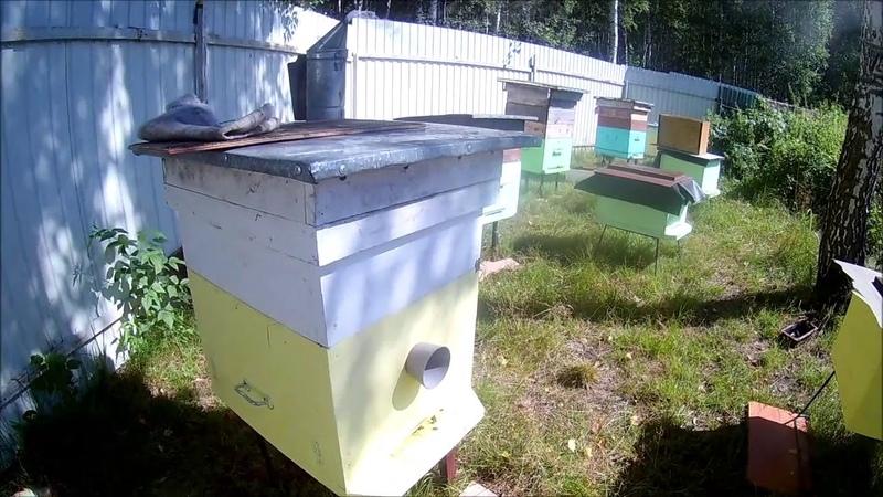 От поимки бродячего роя до откачки мёда
