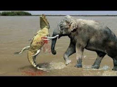 악어 대 코끼리 화가 코끼리 악어 💥 카메라에 잡았다