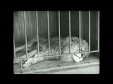 Charlie Chaplin - The Lion's Cage.mp4