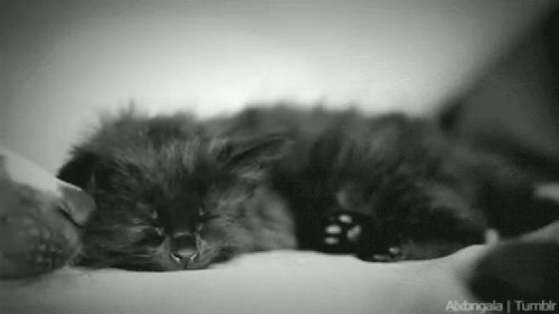 Я сплю, отвянь...