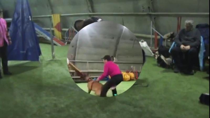 Тренинг с Яном Тор , Задор , Картер и Амиго