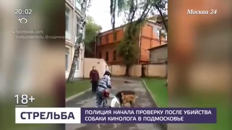 Полиция начала проверку после убийства собаки кинолога в Подмосковье Москва