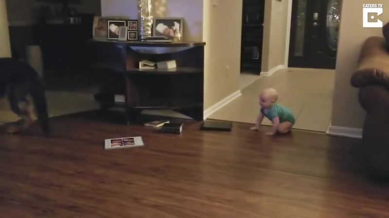 German Shepherd And Baby Play Chase Together
