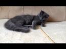 Кот ленивец, 4 месяца, свободен