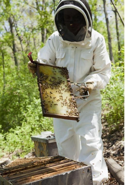 Пчеловод, который выращивает пчелы без использования пестицидов, использует органическое пчеловодство.