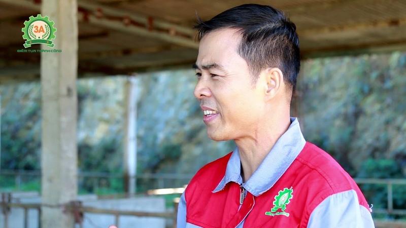 Chia sẻ KỸ THUẬT NUÔI BÒ làm giàu của nông dân Mộc Châu