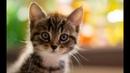 Котики и милые котята 2018. Приколы с котами и собаками
