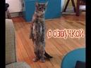 Приколы с котами – СМЕШНАЯ ОЗВУЧКА ЖИВОТНЫХ – Новые приколы про котов от PSO