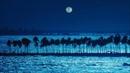 Fous  De La Mer ~ Clair De Lune