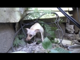 Saving a homeless Chihuahua who was NOT ready yet for human contact