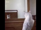 Этот кот обнаружил, что у него есть уши ??? Очень забавное видео!
