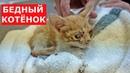 Котёнок лишился глаз Самая печальная история Ветеринарное ранчо