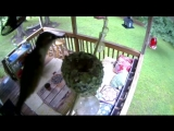 Колибри тоже вьют гнезда