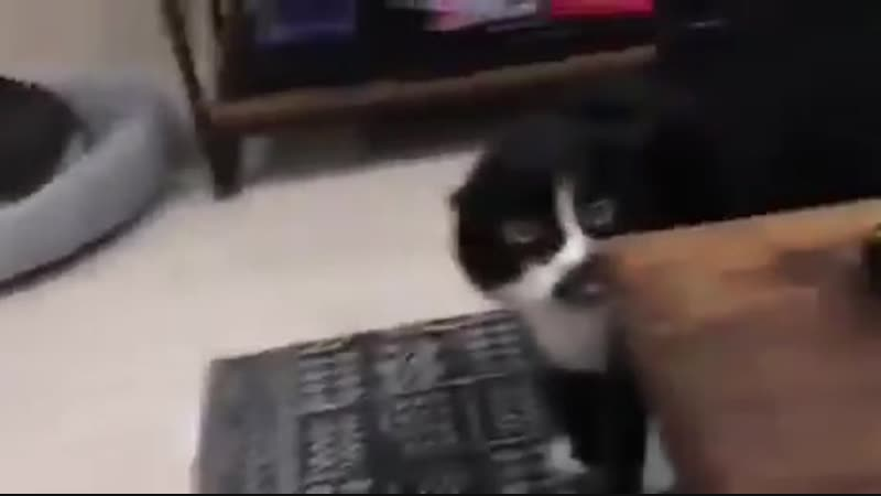Смешной кот исполняет национальные грузинские мотивы