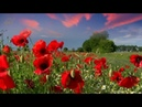 PIANO VIOLIN GUITAR SUMMER MUSIC NATURE SOUND RELAXING MEDITATION STRESS RELIEF CHILL SPA