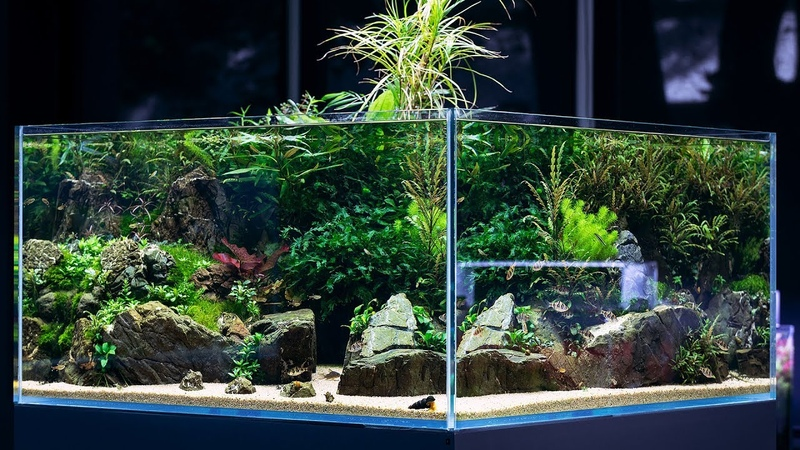 BEAUTIFUL AQUASCAPE with 360 view - Cinematic short by Green Aqua
