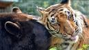 Удивительные истории о дружбе животных