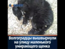 маленький умирающий щенок Волгоград