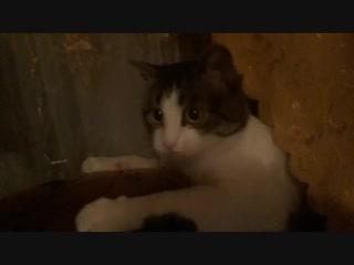 Разминка для Кити