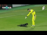 Goalie plays with stray dog that invaded a professional soccer game in Georgia