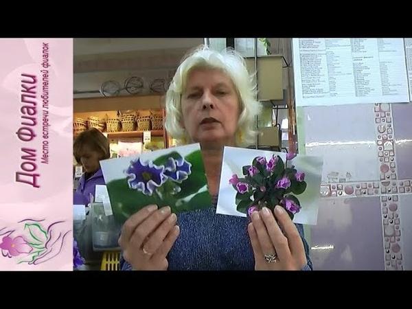 ДФ.Новинки селекции минисенполий (сент.2018)