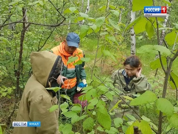 Спасатели обнаружили потерявшихся в ямальских лесах грибников