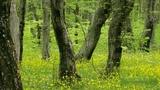 Весенний лес, пение дроздов - звуки природы Beautiful Nature