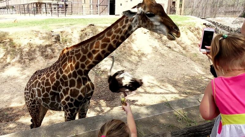Самый Крутой ЗООПАРК для всей семьи Эмили и девочки в зоопарке КОРМЯТ и гладят животных Влог