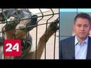 Законопроект Об ответственном обращении с животными