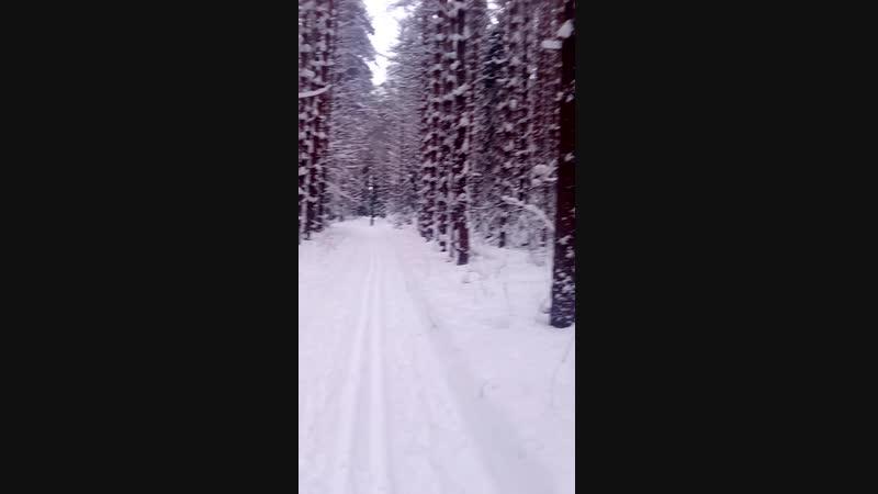 Красивая зима в лесу 🌲❄⛄☃ Вятская природа
