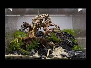 Aquarium moss tree - Bonsai driftwood - Easy aquascape