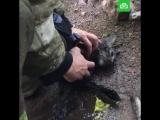 Пожарные реанимируют кошек