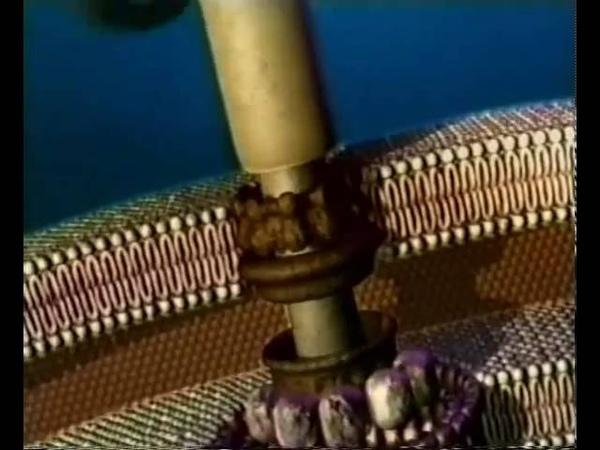 мотор бактерии