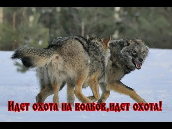 Владимир Высоцкмй - ИДЕТ ОХОТА НА ВОЛКОВ