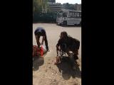 Сева Пища Мира. 18.08.2018 г. Ярославский вокзал.