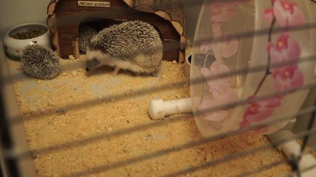 Ёж Трудовых Будней (Everyday Work Hedgehog)
