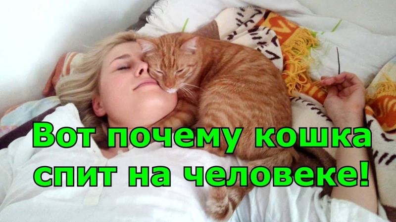 Вот почему кошка спит на человеке Любимые места кошки Приметы